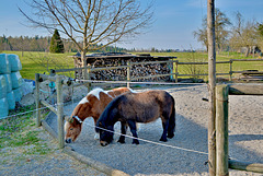 Kleine Pferde