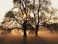 Comme le vent dans les arbres...