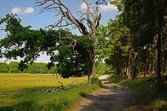 Ein romantischer Waldweg - A romantic forest trail