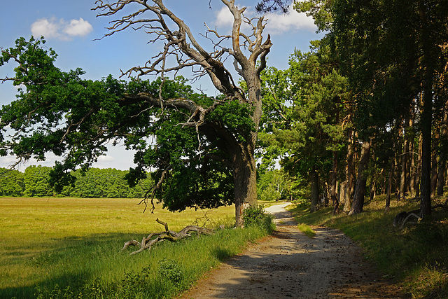 Ein romantischer Waldweg - A romantic forest trail