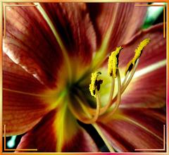 Herz der Lilie. ©UdoSm