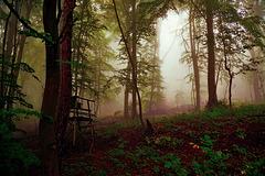 Septembermorgen - September morning - PiP