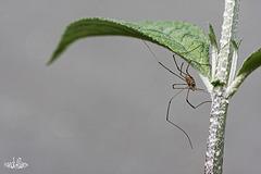 L'araignée au plafond