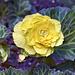 Yellow Rose – Botanical Garden, Montréal, Québec