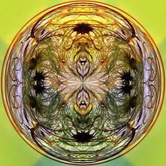 Clematis circle