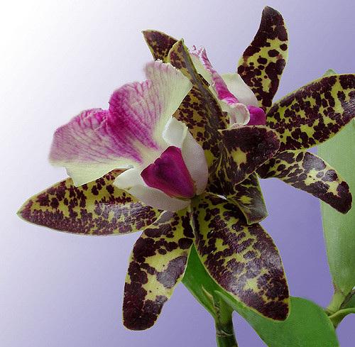 InFull Bloom