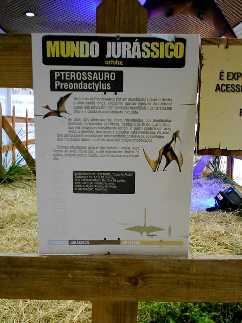 DSCN2853 - Preondactylus, Pterosauria