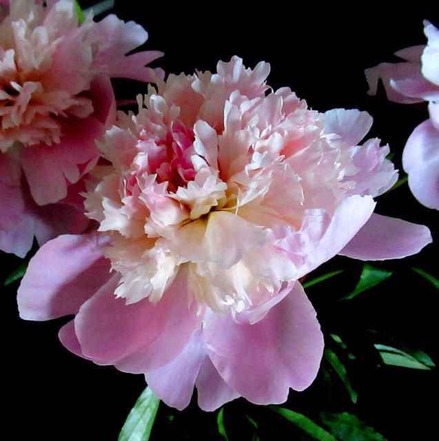 Bonne Fête des Mères / Happy Mother's Day