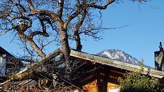 Dachschaden   oder  ein Baumhaus