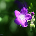 Something Violet