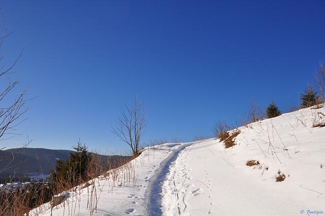 oberhalb Schluchsee, auf dem Weg zum Riesenbühlturm (© Buelipix)