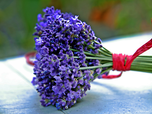 Der Lavendel blüht...