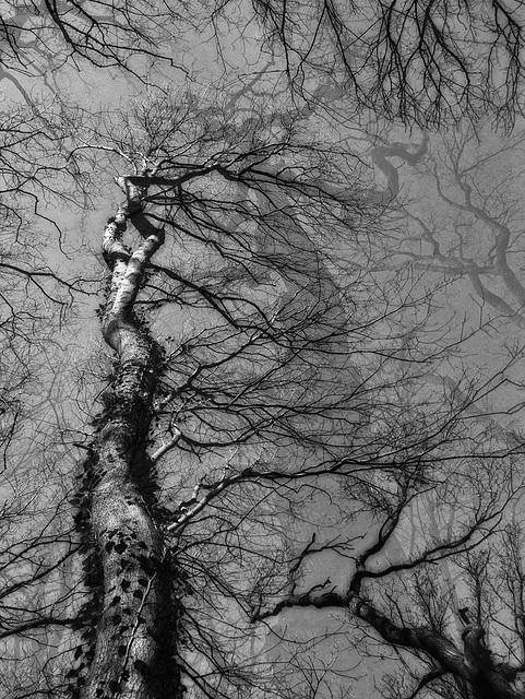 Tree Phantasy (2/3) (2 PiP)