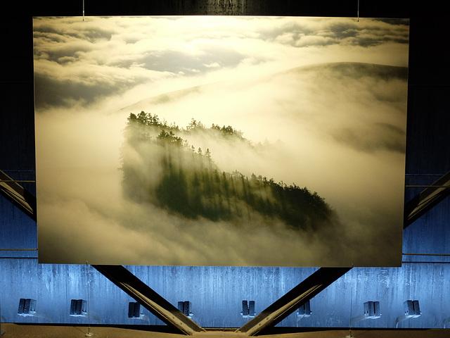 """""""Mammutbäume in der Bucht von Monterey"""" - Foto in der Ausstellung """"Wunder der Natur"""" im Gasometer Oberhausen"""