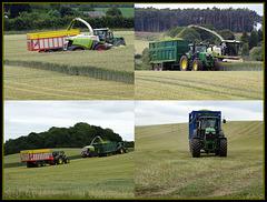 Harvesting story