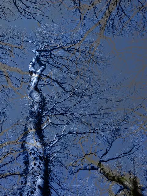 Tree Phantasy (3/3) (2 PiP)
