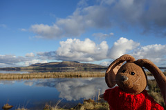 Spring is in the air (Rabbit hopes) on the shore of Loch Leven