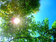 Sun day