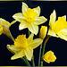Spring-Sundays Flowers.  ©UdoSm