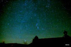 Starr, starry night: Orion
