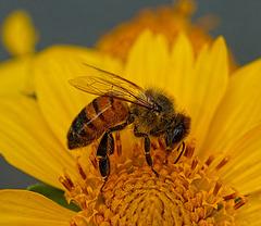 A Taste Of Honey  & Summer Remembered