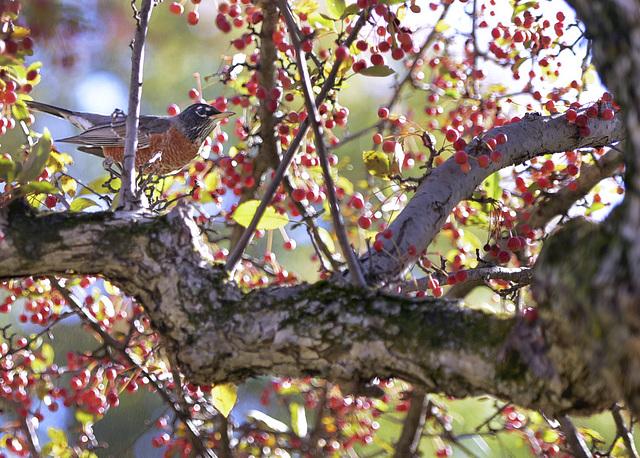 birdwithberries-text