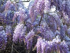 Flores de la pluma