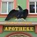 Grimma 2015 – Apotheke