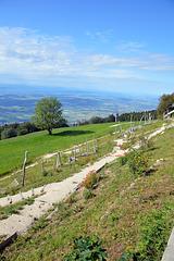 Blick vom Weissenstein in die Region Seeland, im Hintergrund beginnt die Region der Westschweiz   (  umgangssprachlich das Welschland )