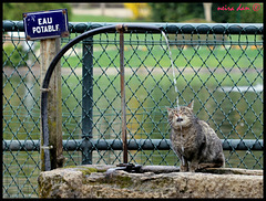 un chat qui sait lire- HFF