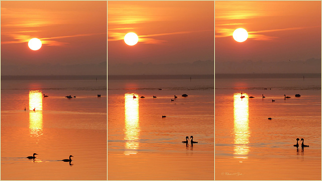 Love under the Rising Sun...