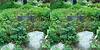 LA County Arboretum stereoscopy 12