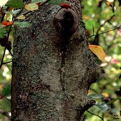Nature ART ....le mégot..au bout de la lèvre
