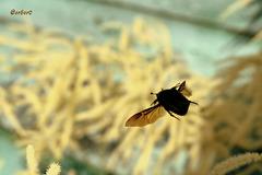 жук в полёте