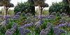 LA County Arboretum stereoscopy 9
