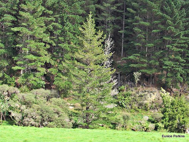 Quiet Forest.