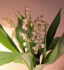 Bon 1er Mai / Happy 1st of May!