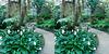 LA County Arboretum stereoscopy 7