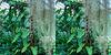 LA County Arboretum stereoscopy 6