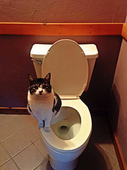 Kitty on a throne