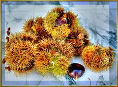 Fruits of autumn... ©UdoSm