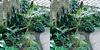 LA County Arboretum stereoscopy 5