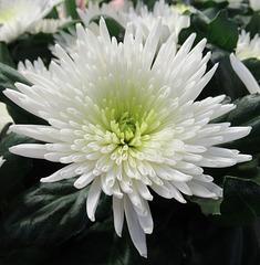 Une touche de blanc / A touch of white