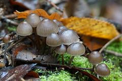 Pilzzeit - Mushroom season