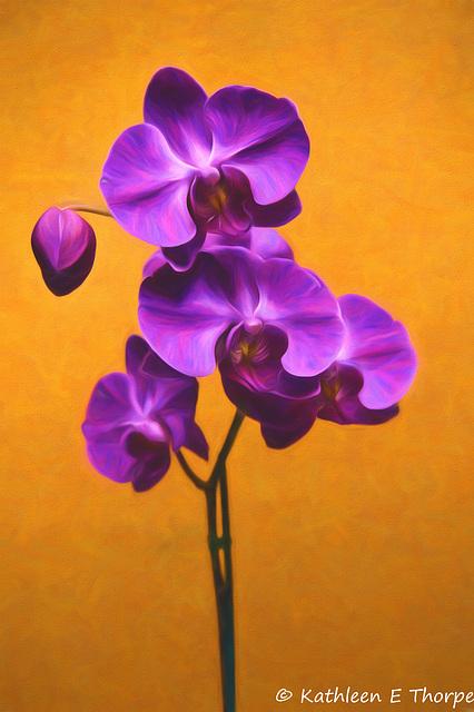 Phalaenopsis - Topaz Painting Georgia Okeeffe