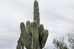 The Fickle Finger of Fate – Desert Botanical Garden, Papago Park, Phoenix, Arizona