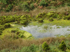 Small pond surrounded by heath.