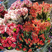 Roses and Tulips on the Friday market