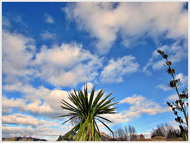 Flax Tree Against the Sky.