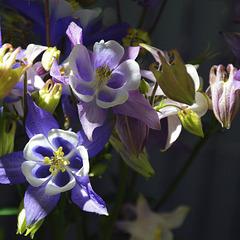 Couleurs dans le jardin..../ Colors in the garden